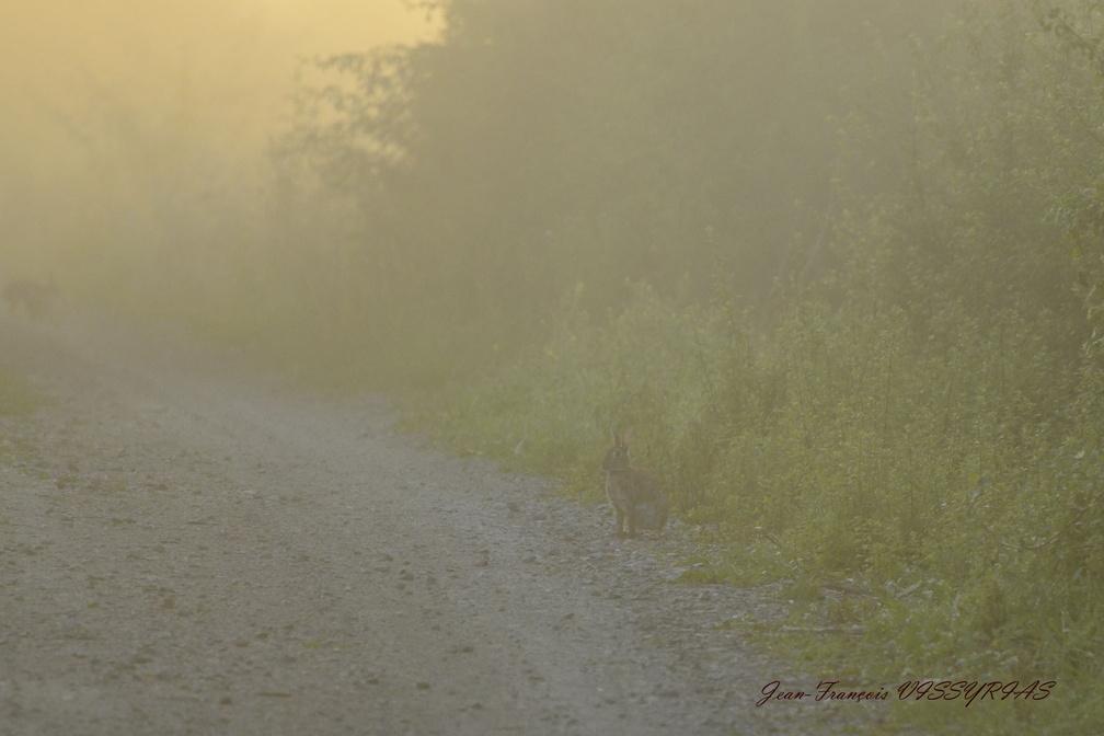 lapin dans la brume