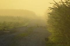 lapins et perdraux dans la brume