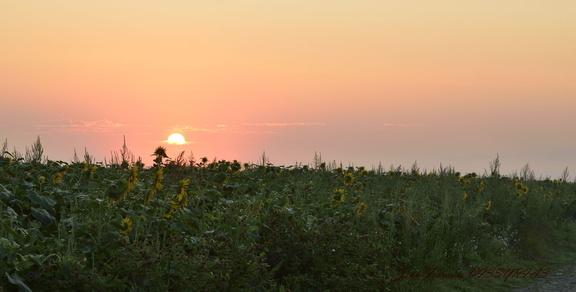 levé du soleil brumeux en Limagne